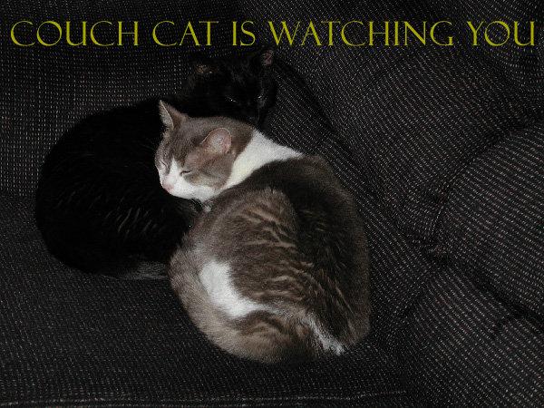 CouchCat