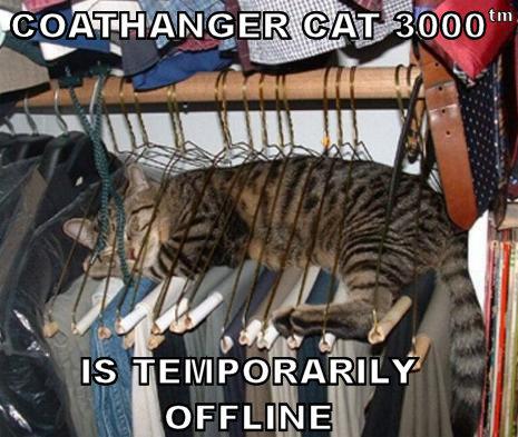 coathanger-cat-3000