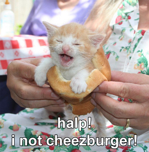 halp-i-not-cheezburger
