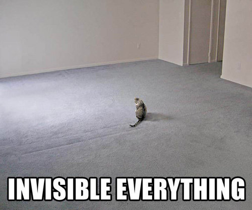 Invisible Everything - Meme Cats
