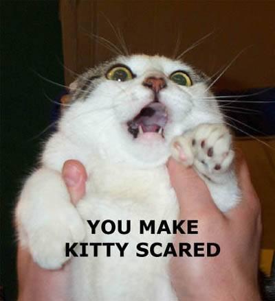 scared_kitty.jpg